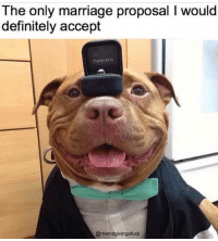 #showpo #meme #funny #funnyquote #laugh #iloveshowpo: The only marriage proposal I would  definitely accept  TIFTASY&Co  @menotgivingafuck #showpo #meme #funny #funnyquote #laugh #iloveshowpo
