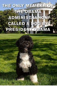 Memes, Obama, and 🤖: THE ONLY MEMBER OF  THE OBA  ADMINISTRATION  CALLED A DO  PRESIDENT OBAMA