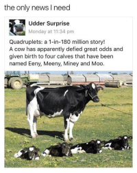Calves: the only news I need  Udder Surprise  Monday at 11:34 pnm  Quadruplets: a 1-in-180 million story!  A cow has apparently defied great odds and  given birth to four calves that have been  named Eeny, Meeny, Miney and Moo.