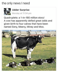 Apparently, Funny, and News: the only news l need  Udder Surprise  Monday at 11:34 pm  Quadruplets: a 1-in-180 million story!  A cow has apparently defied great odds and  given birth to four calves that have been  named Eeny, Meeny, Miney and Moo. What an absolute udder suprise.