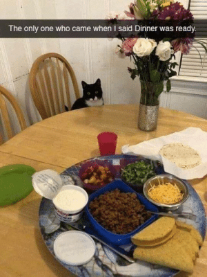 Memes, Only One, and 🤖: The only one who came when I said Dinner was ready
