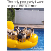 Get me on that duck float ASAP. Pup @gilesthepug: The only pool party I want  to go to this summer  dogsbeingbasic  agilesthepug Get me on that duck float ASAP. Pup @gilesthepug