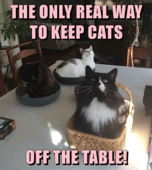 Magnificent The Only Real Way To Keep Cats Off The Table Cats Meme On Interior Design Ideas Gentotthenellocom