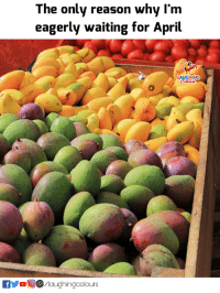 #mangoes :): The only reason why I'm  eagerly waiting for April  AUGHIN  fyo/laughingcolours #mangoes :)