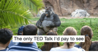 <p>Best Of: TED Talk Gorilla Memes</p>: The only TED Talk I'd pay to see <p>Best Of: TED Talk Gorilla Memes</p>