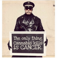 Memes, 🤖, and Cannabies: The only thing  Cannabis kills  is CANCER