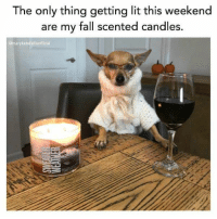 Fall, Lit, and Lol: The only thing getting lit this weekend  are my fall scented candles.  Ømarykatefalisofficial 40 Memes To Make You LOL