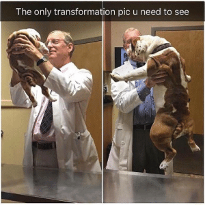 Pic,  See, and  Need: The only transformation pic u need to see
