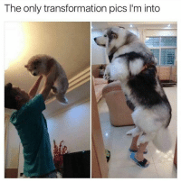 Absolutely yuge doge. | For more @aranjevi: The only transformation pics l'm into Absolutely yuge doge. | For more @aranjevi