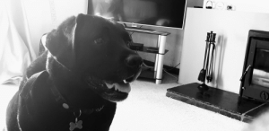 Black, Black and White, and Pictures: The only way I can take pictures of my black lab is in black and white!