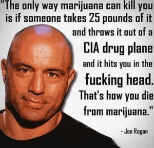 "Only way marijuana kill you: ""The only way marijuana can kill you  is if someone takes 25 pounds of it  and throws it out of a  LIA drug plane  and it hits you in the  fucking head  That's how yau die  from marijuana.""  - Joe Rogan Only way marijuana kill you"