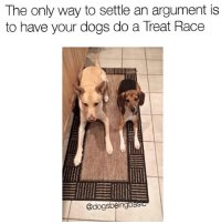 Memes, 🤖, and Alphas: The only way to settle an argument is  to have your dogs do a Treat Race  @dogs  ng Would love to see more of these. This will prevent any domestic disputes. There can only be one alpha. Not even a contest. He didn't even move. TreatRace Better luck next time @willardsworld