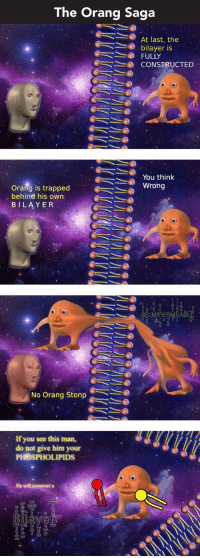 """Reddit, Iman, and Saga: The Orang Saga  .  At last, the  bilayer is  FULLY  CONSTRUCTED  @ーミン wrong  You think  Orang is trapped  behind his own  BILAYER  No Orang Stonp  : If you see this iman,  do not give him your  PHOSPHOLIPIDS  He will construet a <p>[<a href=""""https://www.reddit.com/r/surrealmemes/comments/82h8yf/s_e_m_i_p_e_r_m_e_a_b_l_e_full_orang_saga/"""">Src</a>]</p>"""