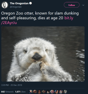 kidzbopdeathgrips:  paxamericana: salute  : The Oregonian  @Oregonian  Follow  Oregon Zoo otter, known for slam dunking  and self-pleasuring, dies at age 20 bit.ly  3:59 PM-20 Dec 2018  642 Retweets 1,671 Likes kidzbopdeathgrips:  paxamericana: salute