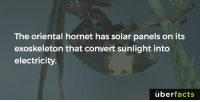I'm amazed. http://news.nationalgeographic.com/news/2010/12/101221-solar-power-hornet-science-animals/: The oriental hornet has solar panels on its  exoskeleton that convert sunlight into  electricity.  uber  facts I'm amazed. http://news.nationalgeographic.com/news/2010/12/101221-solar-power-hornet-science-animals/