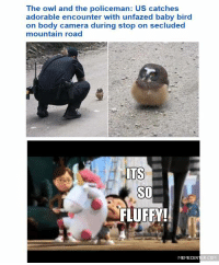Memes, 🤖, and Owl: The owl and the policeman: US catches  adorable encounter with unfazed baby bird  on body camera during stop on secluded  mountain road  ITS  SO  FLUFFY!  MEMECENTER Just look at that little thing! LOOK AT IT!