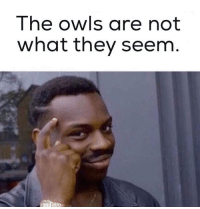 Dank Memes, Owl, and Owls: The owls are not  what they seem