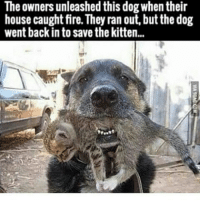 caught fire: The owners unleashed this dog when their  house caught fire. They ran out, but the dog  went back in to save thekitten...