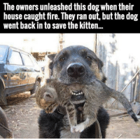 Now this is friendship: The owners unleashed this dog when their  house caught fire. They ran out, but the dog  went back in to save the kitten.. Now this is friendship