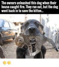 Love this dog: The owners unleashed this dog when their  house caught fire. They ran out, but the dog  went back in to save the kitten.. Love this dog