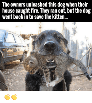 Fire, Love, and Tumblr: The owners unleashed this dog when their  house caught fire. They ran out, but the dog  went back in to save the kitten.. awesomacious:  Love this dog