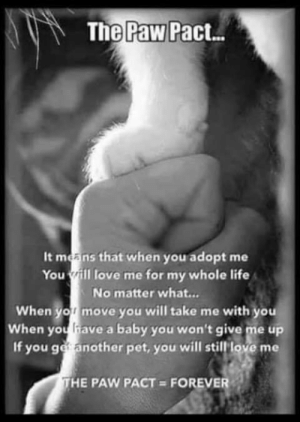 Life, Love, and Memes: The Pact.  Paw  It means that when you adopt me  You rill love me for my whole life  No matter what..  When yo move you will take me with you  When you have a baby you won't give me up  If you ge another pet, you will still love me  HE PAW PACT FOREVER