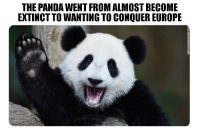 Panda: THE PANDA WENT FROM ALMOST BECOME  EXTINCT TO WANTING TO CONQUER EUROPE