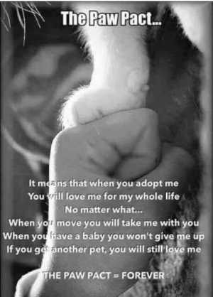 Life, Love, and Memes: The Paw Pact  It means that when you adopt me  You ill love me for my whole life  No matter what...  When yor move you will take me with you  When youhave a baby you won't give me up  If you ger another pet, you will still love me  THE PAW PACT FOREVER