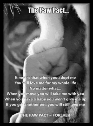Life, Love, and Memes: The Paw Pact...  It means that when you adopt me  You ill love me for my whole life  No matter what...  When yomove you will take me with you  When you have a baby you won't give me up  If you ger another pet, you will still love me  THE PAW PACT  FOREVER **Cherie**