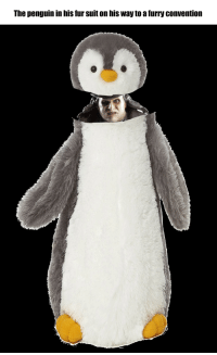Penguin: The penguin in his fur suit on his way to a furry convention