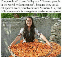 """https://t.co/xUPmVLFB2q: The people of Hunza Valley are """"The only people  in the world without cancer"""", because they use &  eat apricot seeds, which contains Vitamin B17, that  kills cancer cells & strengthens the immune system.  EBAT: Health With Andishe  @beauty secretsfora https://t.co/xUPmVLFB2q"""