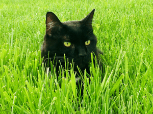 The perfect black cat picture doesn't exi...: The perfect black cat picture doesn't exi...