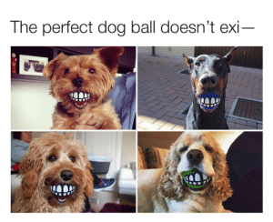 They're real and they're spectacular  hygoshop.com/dogtball: The perfect dog ball doesn't exi They're real and they're spectacular  hygoshop.com/dogtball