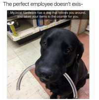 Life, Money, and Restaurant: The perfect employee doesn't exis-  My local hardware has a dog that follows you around,  and takes your items to the counter for you. PSA: TIP UR SERVERS MORE PLZZZZZZZ WE ARE TIRED AND SAD AND WE WANT TO DIE SO GIVE US FUCKINF MONEY - a disgruntled child laborer who has been slaving off for his family's restaurant for a quarter of his entire life, only to encounter a $1.22 tip for a $71 bill