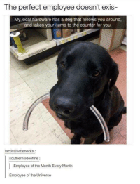 "Dog, Local, and Universe: The perfect employee doesn't exis-  My local hardware has a dog that follows you around,  and takes your items to the counter for you.  tacticaltvrtlenecks  southernsideofme:  Employee of the Month Every Month  Employee of the Universe <p>Employee of the month. via /r/wholesomememes <a href=""https://ift.tt/2kdn52R"">https://ift.tt/2kdn52R</a></p>"