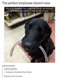 Dank, 🤖, and Dog: The perfect employee doesn't exis-  My local hardware has a dog that follows you around,  and takes your items to the counter for you.  tacticaltvrtlenecks:  southernsideofme  Employee of the Month Every Month  Employee of the Universe