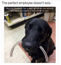 Memes, 🤖, and Dog: The perfect employee doesn't exis-  My local hardware has a dog that follows you around,  and takes your items to the counter for you. I'd hire him