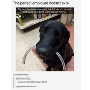 Dog, Local, and Universe: The perfect employee doesn't exis-  My local hardware has a dog that follows you around,  and takes your items to the counter for you  tacticaltvrtlenecks:  southernsideofme  Employee of the Month Every Month  Employee of the Universe Number one employee