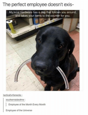 Tumblr, Never, and Dog: The perfect employee doesn't exis-  My local hardware has a dog that follows you around  and takes your items to the counter for you.  tacticaltvrtlenecks  southernsideofme:  Employee of the Month Every Month  Employee of the Universe Tumblr never fails to produce gems!