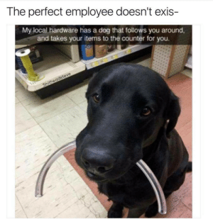 Dog, Local, and Hardware: The perfect employee doesn't exis-  My local hardware has a dog that follows you around,  and takes your items to the counter for you.  Ne  the