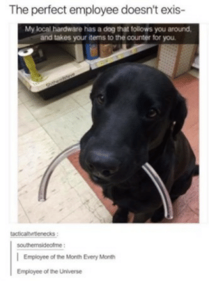 Dog, Local, and Universe: The perfect employee doesn't exis-  My local hardware has a dog that follows you around  and takes your items to the counter for you  tacticaltvrtlenecks:  southernsideofme:  | Employee of the Month Every Month  Employee of the Universe