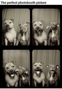 Picture, Perfect, and  Photobooth: The perfect photobooth picture