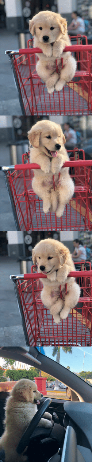 The perfect shopping buddy 🛒😍: The perfect shopping buddy 🛒😍