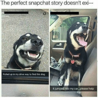 Driving, Memes, and Snapchat: The perfect snapchat story doesn't exi-  Pulled up in my drive way to find this dog  It jumped into my car...please help Follow my other accounts @antisocialtv @lola_the_ladypug @x__antisocial_butterfly__x ❤️
