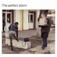 Memes, 🤖, and Storm: The perfect storm