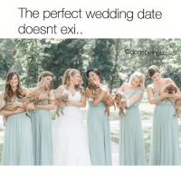 When you all find good boys.: The perfect wedding date  doesnt exi,  @dogs beingbasic When you all find good boys.
