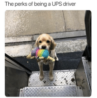 Memes, Ups, and Awesome: The perks of being a UPS driver Looks like a pretty awesome job to me | @cuteandfuzzybunch