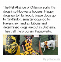 Dogs, Gryffindor, and Memes: The Pet Alliance of Orlando sorts it's  dogs into Hogwarts houses. Happy  dogs go to Hufflepuff, brave dogs go  to Gryffindor, smarter dogs go to  Ravenclaw, and ambitious andd  determined dogs are put in Slytherin  They call the program Pawgwarts.  ufp  @yup.that.exists