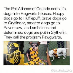 Dogs, Gryffindor, and Slytherin: The Pet Alliance of Orlando sorts it's  dogs into Hogwarts houses. Happy  dogs go to Hufflepuff, brave dogs go  to Gryffindor, smarter dogs go to  Ravenclaw, and ambitious and  determined dogs are put in Slytherin  They call the program Pawgwarts.  flefferuyy  AUУ  @yup.that.exists awesomacious:  Yer A Wizard Fido!