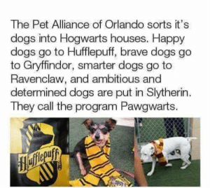 I'm cry: The Pet Alliance of Orlando sorts it's  dogs into Hogwarts houses. Happy  dogs go to Hufflepuff, brave dogs go  to Gryffindor, smarter dogs go to  Ravenclaw, and ambitious and  determined dogs are put in Slytherin  They call the program Pawgwarts. I'm cry